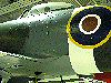 The RAF hawker Typhoon 1B Fighter Bomber